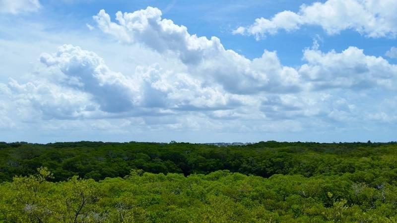 View Of Grassy Preserve