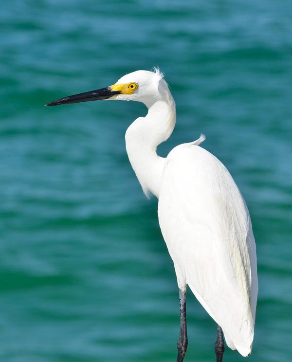 anna maria island wildlife