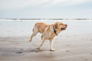 dog friendly things to do anna maria island